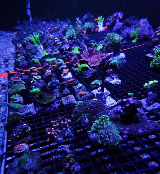 Local fish and aquarium stores in az for Saltwater fish stores near me