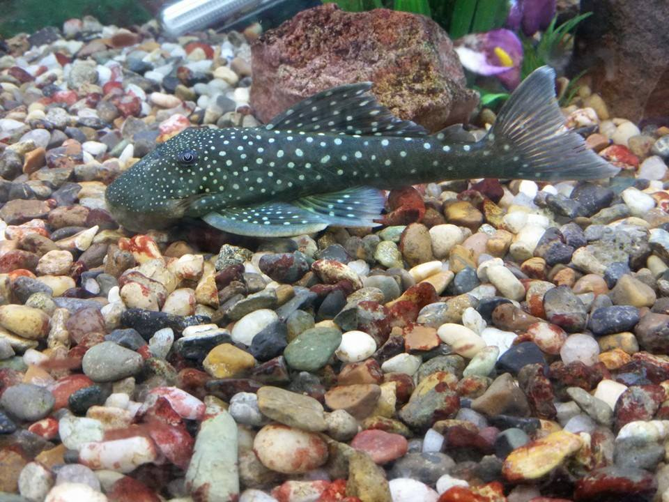 Greentree pet center clarksville in for Pet stores with fish near me
