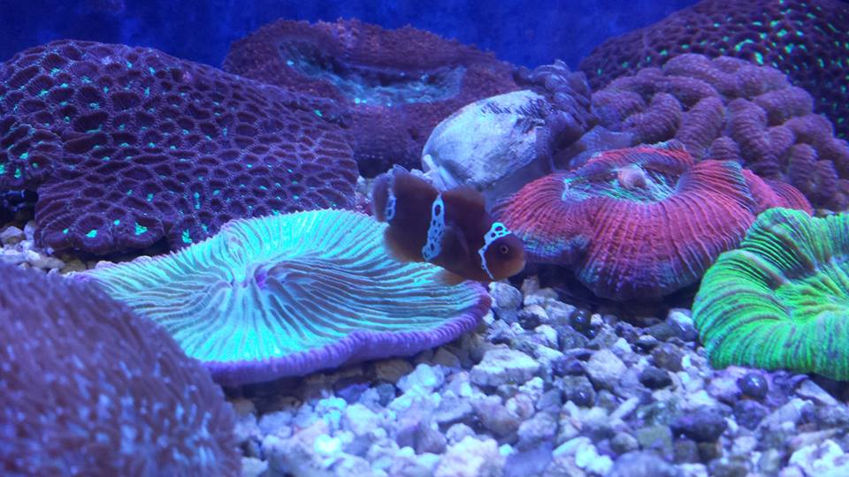 Aquatek tropical fish austin tx for Exotic fish store near me