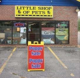 Little shop of pets portsmouth nh for Fish supplies near me