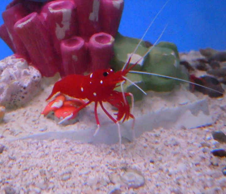 Local fish and aquarium stores in az for Where to buy fish near me