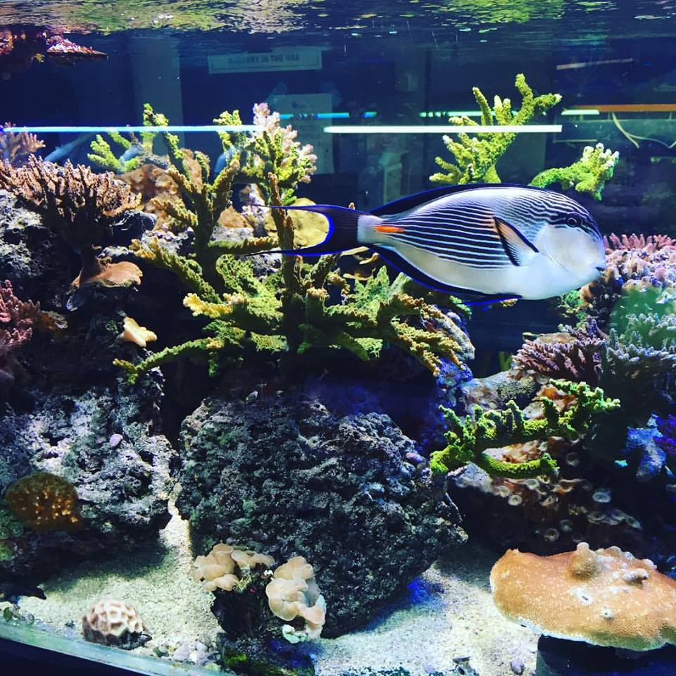 Aquarium near me nc for Fish stores around me