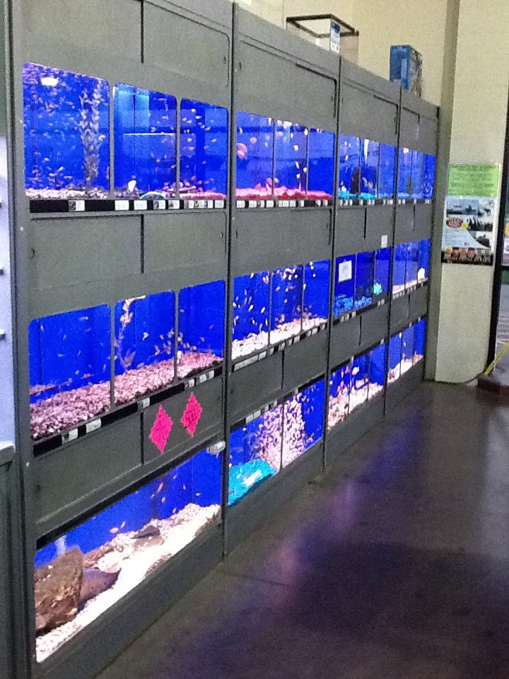 Local fish and aquarium stores in for Good places to fish near me