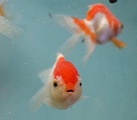 Whiteway pet shop elizabeth nj for Pet fish near me