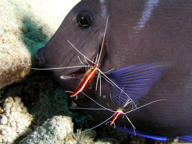 Local fish and aquarium stores in for Fish stores wichita ks