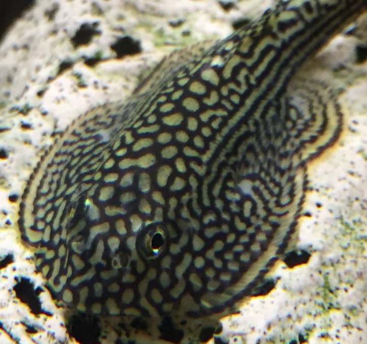 Local fish and aquarium stores in or for Pet stores with fish near me
