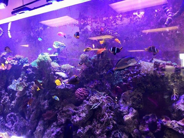 Paradise aquatics kc overland park ks for Fish aquarium store near me