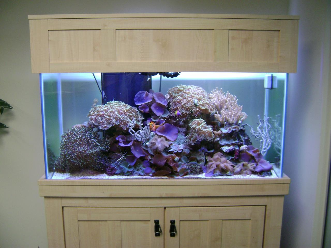 Freshwater fish store near me - Brief Description Aquatic Creations Is A Family Owned And Operaited Aquarium Specialty Company We Build Ta View More Information