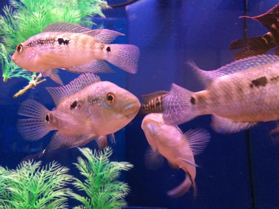 Noahs Ark Pet Aquarium Front Royal Va Fishstoresnearme Com